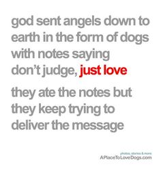 doggie quotes, dog angel, dog love quotes, funny dogs, dog sayings, love my dog quotes, cute dog quotes, animals are my life, doggy angels