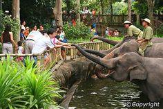 Singapore Zoo. Singapore, Singapore
