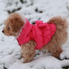 Miss Belle, Poochon, Bichpoo, Bichon, Poodle, Puppy, Snow dog, Dog clothes