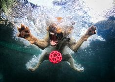 Makes me Smile. dog pics, underwater photos, swimming pools, dog photos, pet, friend photos, underwater photography, underwater dogs, dog photography
