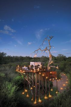 sands, games, tree houses, treehous, south africa, trees, ivory, lions, lodges
