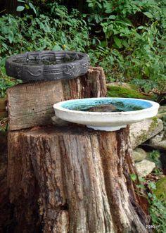 tree stumps, birdbath, tree hugger