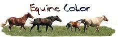 Color Genetics Coat Color Calculator.  This one has pearl, etc and shows a picture, listing each geneotype.
