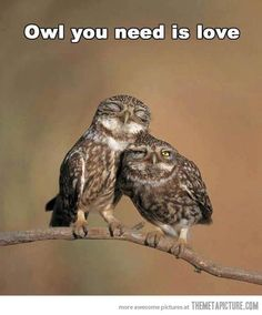 Owl you need is love…