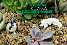 Adventures in all things food - DIY Kid-Friendly Succulent Garden. Let their imaginations come alive and create a fun and easy to care for succulent garden.