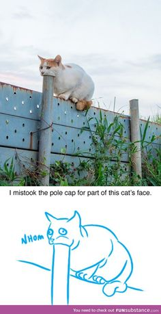 Is this cat eating a pole or...