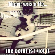 Lolcats: There was a fly...