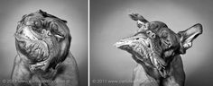 omg awesome pet photography.