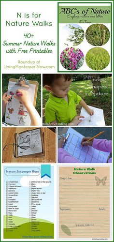 40+ Summer Nature Walks with Free Printables (part of the ABC's of Nature Series)