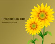 Sunflowers PowerPoint Template is free sunflower template for PowerPoint that you can use to decorate your presentations
