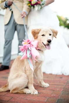 Dress up + include your dog in your wedding!
