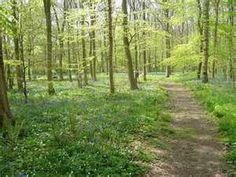 Walk in woods #OrvisWomen