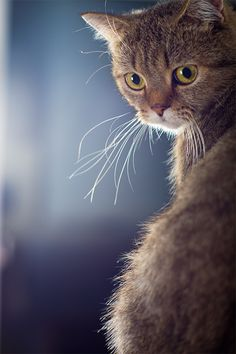 Beautiful kitty whiskers.