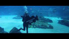 Alex Pedowitz' Bat Mitzvah at the Georgia Aquarium | DJ & Videography by Lethal Rhythms (www.lethalrhythms.com) #LethalRhythms #AtlantaMitzvah #AtlantaDJ #BatMitzvah #GeorgiaAquarium @Georgia Aquarium
