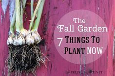 7 Things to plant now in the fall garden | empressofdirt.net