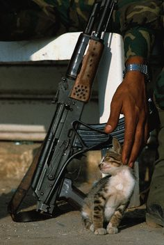 Palestinian soldier stroking a kitten  June 1982 - Beirut, Lebanon