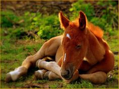 Wow!! Now, isn't it so so very very sweet and beautiful?? Wow!! Love it!! Just look at that glow from his colour and all that sweetness that it has in it!! Love it so so very very much, and love the whole pic as whole too!! Super super awesome and beautiful pic!! Love it!! :))      (It's a foal, a young horse :)).)    (By aisfogel.)    #God #nature #spirituality #beautiful #beauty #horse #horses #foal #foals #animal #animals #sweet