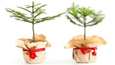 How Much Did Charlie Brown Spend on That Christmas Tree? :: Mint.com/blog