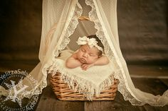 PROP Canopy  Lace Beige newborn Photography by yelitza on Etsy, $49.00