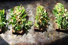 Avocado Asparagus Tartines / 101 Cookbooks