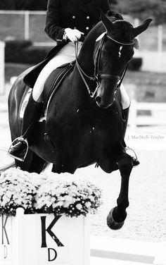 Black horse dressage