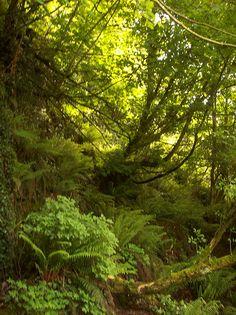 Forest, Cork County, Ireland...