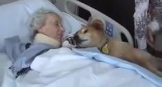 19 Year Old Therapy Dog Visits Patients Nearing Death.