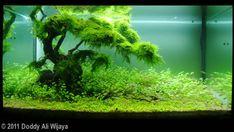 2011 AGA Aquascaping Contest - Entry #357