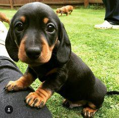 Am I a good boy hooman? - Imgur