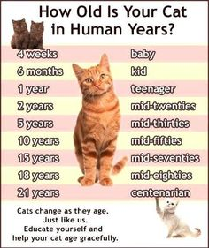 How old is your cat?
