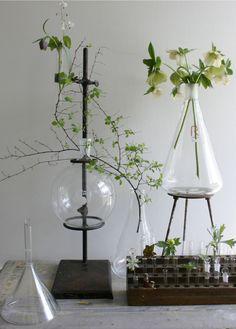 beakers as vases.