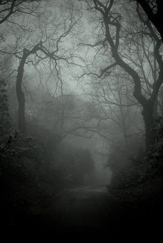 Not uncommon for an Ozarks backwoods road, early during a late autumn morning. dark forest, tree, dream, into the woods, path, sleepy hollow, road, place, walk
