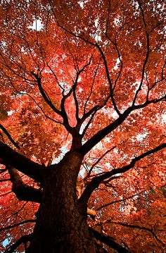 Majestic tree in fall colors