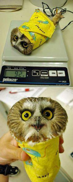 Owl Burrito…