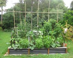 Small Space – Big Harvest: Edible Garden Design