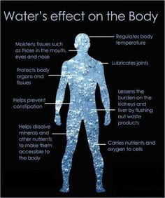 Effect of Water on the Body