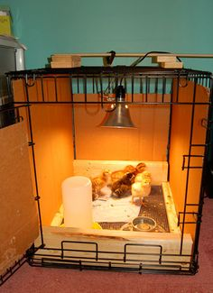 Dog Cage Brooder - what we did last year but it go cramped fast.