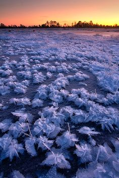 Sunrise in Frozen flowers, Estonia
