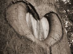 nature, valentine day, tree trunks, scavenger hunts, heart shapes