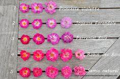 Mon Jardin Mes Merveilles: Planche comparative : Rosiers à petites fleurs semi-doubles (1/2)