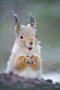 500px / Lucky Squirrel by Gleb Skrebets