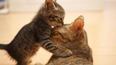 Beautiful Kitty Kiss