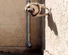 This Super Dog's Parkour Skills are Off the Charts (Video) : Discovery Channel