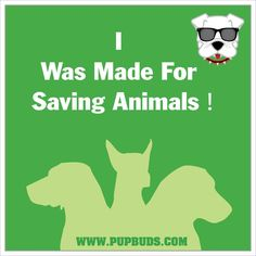 I Was Made For Saving Animals !