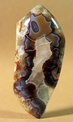 Utah 'yellow cat' Redwood Agate Limb Casts / Petrified Jurassic Conifers dated 145 Ma