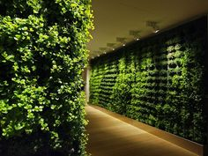 "Plant ""Walls"" for home or office. I think these things are sooo cool!"