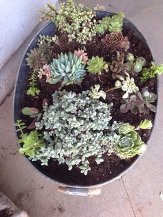 Drink tub for succulents