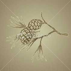 Google Image Result for http://i.istockimg.com/file_thumbview_approve/7543602/2/stock-illustration-7543602-pine-branch-grunge.jpg