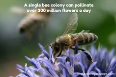 """A single bee colony"
