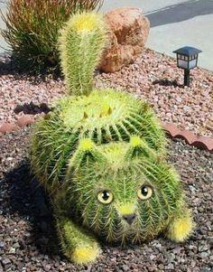 Cool cat cactus